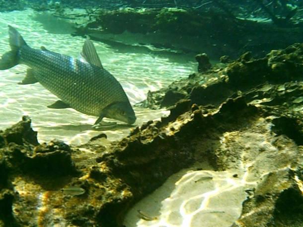 blog-vem-comigo--viagens-e-gastronomia-luiza-menezes-recanto-ecológico-rio-da-prata-flutuação-peixe-águas-cristalinas