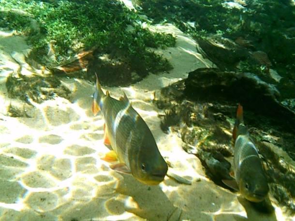 blog-vem-comigo--viagens-e-gastronomia-luiza-menezes-recanto-ecologico-aguas-cristalinas-flutuação-peixe